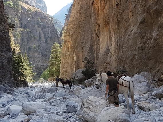 2016-11-28-1480345069-1580500-Hiking_Samaria_Gorge_Crete_11_horses.jpg