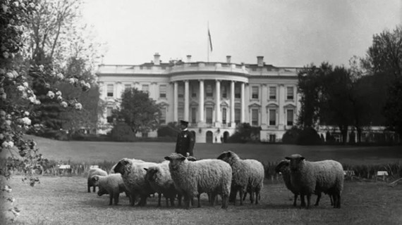 2016-12-05-1480981157-104961-sheepwhitehouse.jpg
