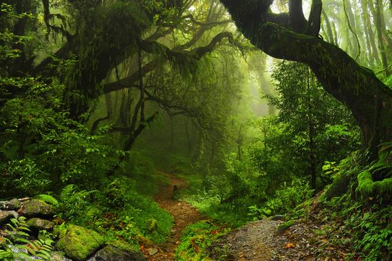 2016-12-06-1481033720-9907550-Wilderness.jpeg
