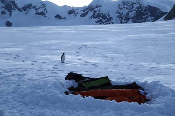 2016-12-06-1481057801-9650691-4ADVENTURES_JeremyKing_Antarctica_CampingPenguin.jpg