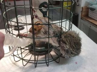 Squirrel trapped in birdfeeder. Photo by Melanie Piazza