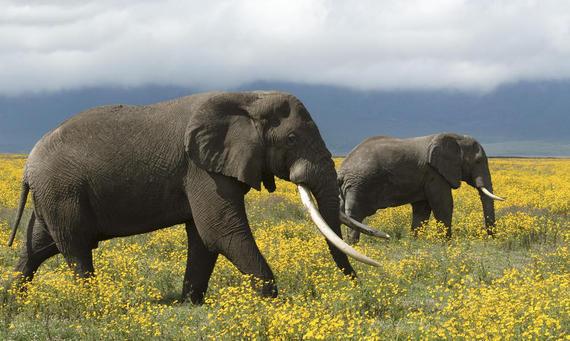 2016-12-14-1481746350-7433154-elephants.jpg