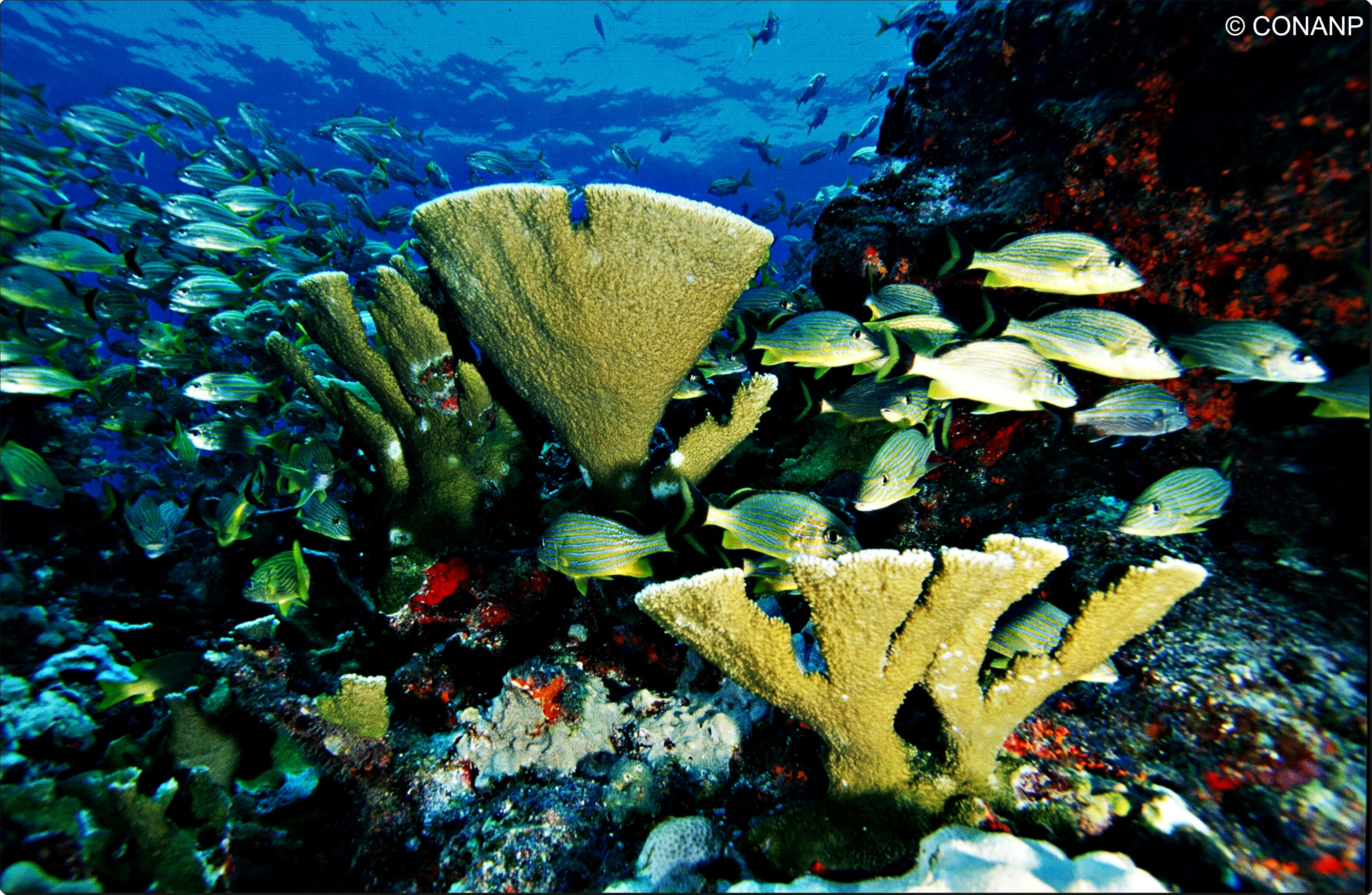 marine protection and biodiversity in mexico Marine biodiversity is under threat from a range of factors, but i would like to focus on the impacts of fishing on biodiversity, and specifically overfishing of marine species and communities and associated ecosystem changes, mortality of non-target species, and the impacts of fishing gear on habitat.