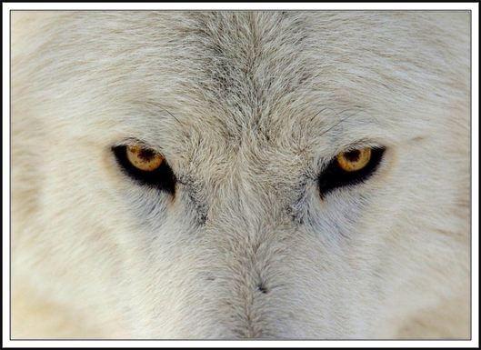 2016-12-23-1482474630-6314112-WerewolfWhite.jpg