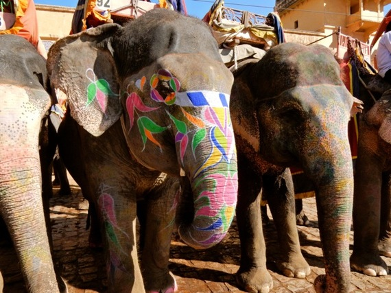 2017-01-12-1484242783-117645-ElephantsatAmerFortJaipur.jpg
