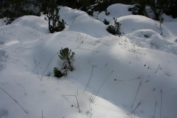 2017-01-13-1484301268-279151-Snow.jpg