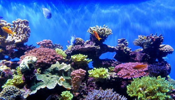 2017-01-18-1484717903-7198297-coralreefCreditGregGoebelatCreativeCommonsccr364.jpg