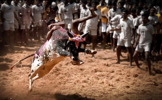 2017-01-18-1484767940-3581702-Maduraialanganallurjallikattu1.jpg
