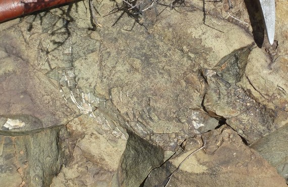 2017-01-25-1485334164-3271414-fossilhunting.jpg