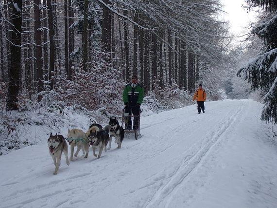 2017-01-31-1485835235-2718761-800pxWerdauer_Wald_Hundeschlittengespann.jpg