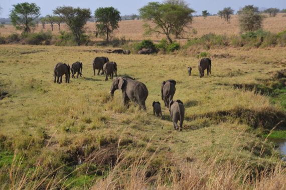 2017-02-10-1486736345-2924095-Elefanten.JPG