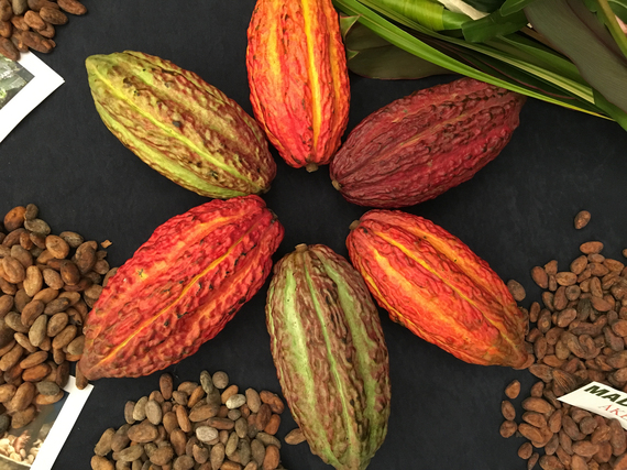 2017-02-14-1487084605-6288433-CacaoPods.JPG