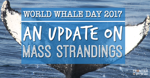 2017-02-17-1487332495-1664006-WorldWhaleDay2017.png