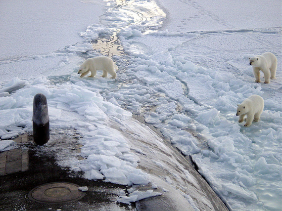 2017-03-08-1488991680-3034330-Polar_bears_near_north_pole.jpg