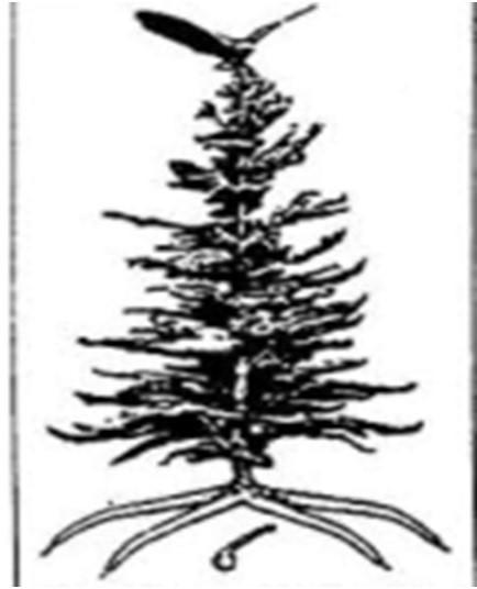 2017-03-15-1489607425-2640782-TreeofPeace2.jpg