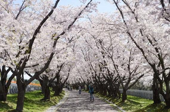 2017-04-18-1492531932-5476370-SapporoTrees.jpg