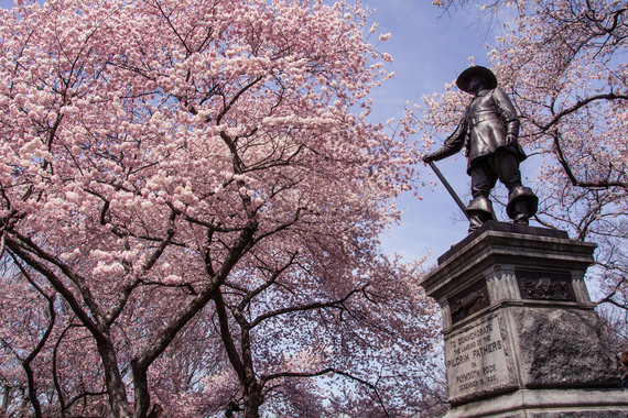 2017-04-18-1492532141-8905273-centralparkcherryblossoms_flickr.com.jpg
