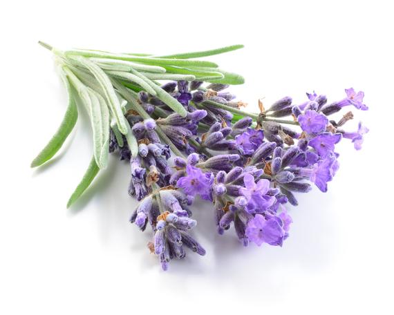 2017-05-08-1494273679-1600712-Lavender.jpg