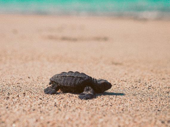 2017-05-09-1494341744-6569675-turtle.jpg