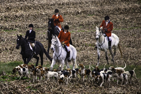 2017-05-22-1495460106-8651427-Horses_and_hounds_Wikimedia_Commons.jpg