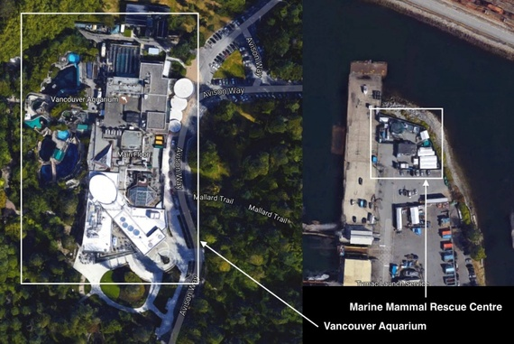 Vancouver Aquarium vs. their Marine Mammal Rescue Centre, courtesy Nic Waller, used with permission