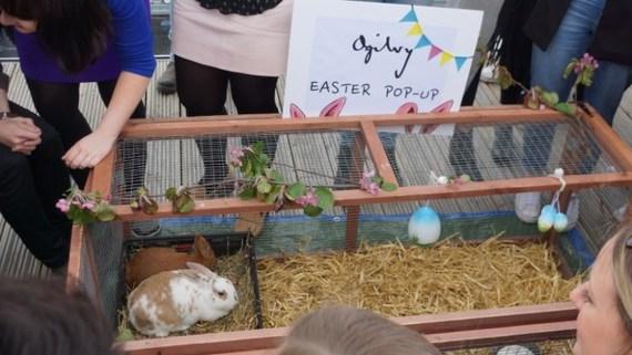 2017-05-29-1496038258-9193096-rabbits2.jpg