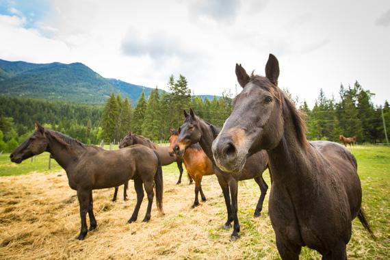 2017-05-31-1496259491-3334429-HorsesHighRes16.jpg