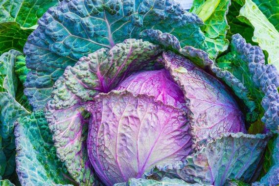 2017-06-13-1497382084-2555143-cabbage1078163_1920.jpg