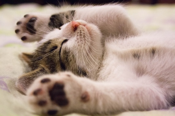 2017-06-15-1497521868-3250258-kitten2288404_1920.jpg