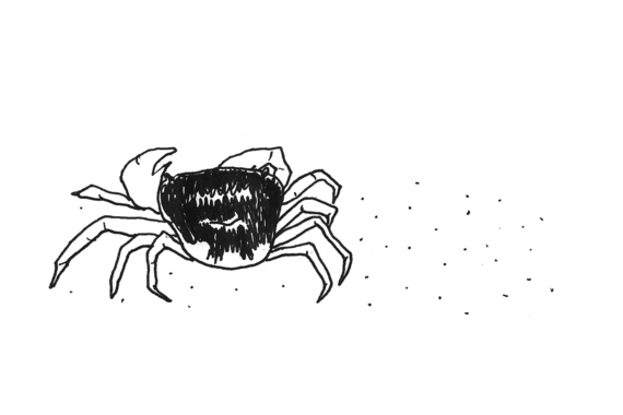 2017-07-05-1499275230-1002259-crab.jpg