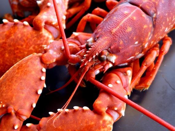 2017-07-10-1499701646-8466793-lobsters3Copy.jpg