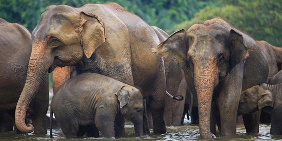 2017-08-08-1502208400-1234431-elephantsinthewaterSTAE.jpg