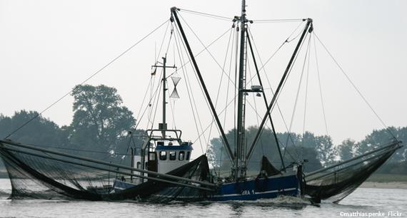 2017-08-14-1502701769-9456761-fischfangfischkutterfischeleiden650x400.jpg