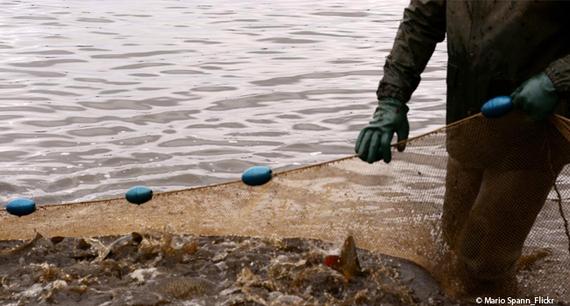 2017-08-14-1502701809-7977770-fischfangtierqualtierefischefischleid650x400.jpg