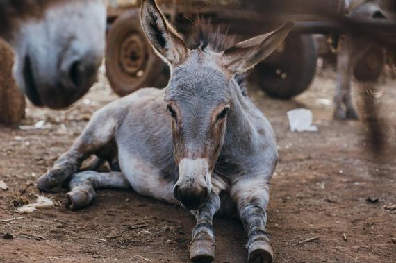 2017-10-09-1507539006-6550135-Donkeyforblog.jpg