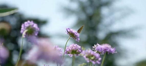 2017-10-10-1507678434-6445082-Butterfly.JPG