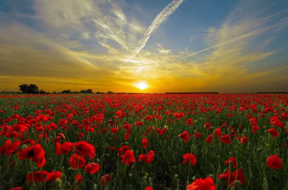 2017-11-06-1509975388-1801315-sunsetfieldpoppysunpriroda.jpg
