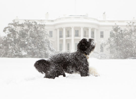 Bo Obama Playing in the Snow