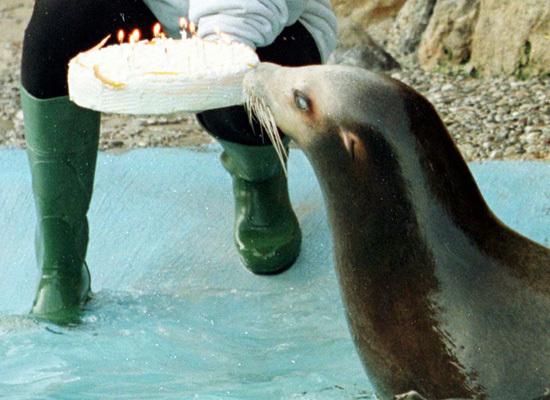 View topic - Cute Zoo Animals Eating Birthday Cake