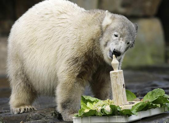 Cute Zoo Animals Eatin...