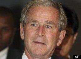 Japan Bush