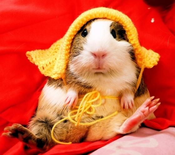 Don't be a venue's recording guinea pig